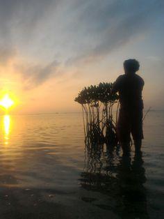 Pantara Sunrise 1