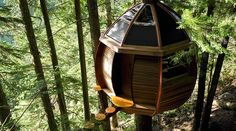 Egg treehouse