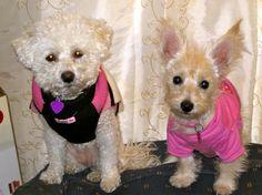 Sweet puppies :o)