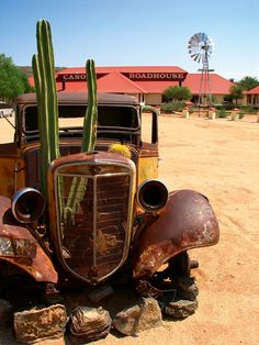 abandoned truck with cactus