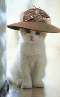 784293f8b2b 21 Best Cats in Cowboy Hats images