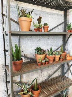 How Much and How Often to Water Succulents — Retro Den