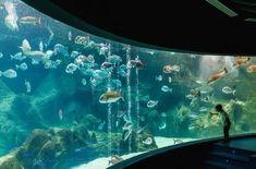 Visiter le CretAquarium à proximité d'Héraklion