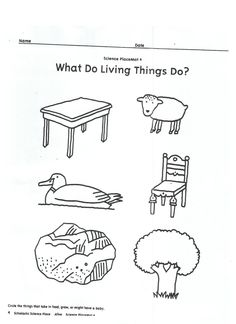 Living vs Non-living activity! I used this as an extension