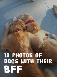 Adorableness!! http://theilovedogssite.com/12-photos-of-dogs-with-a-bff-best-friend-furever/