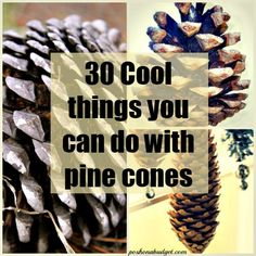 1000 images about diy projects on pinterest cool things for Things to make with fir cones
