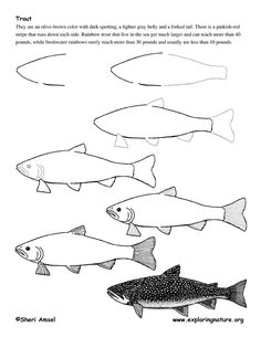 Drawing Lesson PDFs-TROUT @ http://www.exploringnature.org/graphics/drawing/trout_drawing.pdf BASS @ http://www.exploringnature.org/graphics/drawing/drawing_bass.pdf BLUE GILL @ http://www.exploringnature.org/graphics/drawing/bluegill_drawing.pdf PUFFER FISH @ http://www.exploringnature.org/graphics/drawing/drawing_pufferfish.pdf