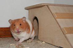 Laughing hamster by Damork, via Flickr