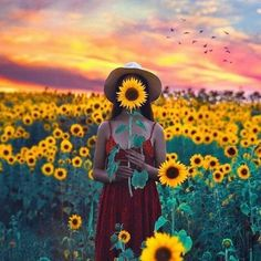 New flowers photography sunflowers sunflower fields ideas Senior Pictures, Cute Pictures, Senior Pics, Random Pictures, Amazing Pictures, Beauty Dish, Sunflower Photography, Photography Flowers, Sunflower Pictures