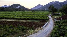 Orebic, Peljesac Peninsula, Croatia (Credit: Jonathan Irish/National Geographic Creative)