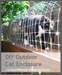 """Someday When I have a house I will do this for my cats! How awesome! They get to go """"outside"""" without the danger."""