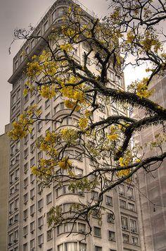 Curitiba #photography #destinations