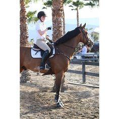 •He makes me so happy  ----------------------------- P.C. @thegracejimenez Dangerous Sports, Florida Style, English Riding, Show Jumping, Horse Photography, Show Horses, Horse Stuff, Horseback Riding, Horse Riding