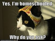 I'm homeschooled. - LOLcats is the best place to find and submit funny cat memes and other silly cat materials to share with the world. We find the funny cats that make you LOL so that you don't have to. Funny Shit, The Funny, Funny Cats, Funny Animals, Cute Animals, Funny Memes, Hilarious, Silly Cats, Funny Stuff