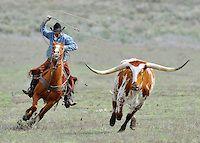 Sombrero Horse Ranch | michael huggan photography