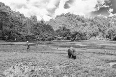Rantepao #Sulawesi #indonesia #beaches #travel #adventure #asia