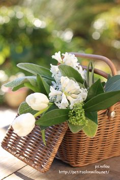 Tulips for a picnic White Flowers, Beautiful Flowers, White Gardens, Spring Green, My Flower, Spring Flowers, Floral Arrangements, Wicker, Bloom