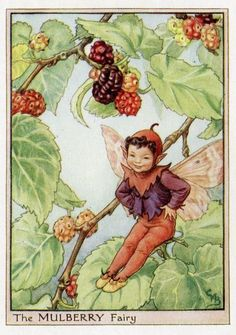 This beautiful Mulberry Flower Fairy Vintage Print by Cicely Mary Barker was printed c.1950 and is an original book plate from an early Flower Fairy book...Cicely Barker created 168 flower fairy illustrations in total for her many books.