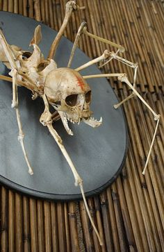 spider skeleton human bones and insect creepy taxidermy