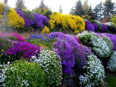 rockery plants