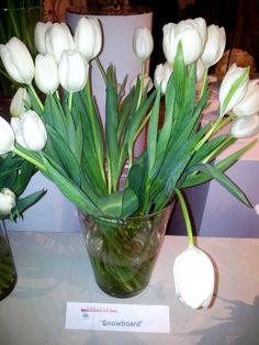 Snowboard tulips