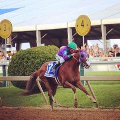 It's all California Chrome in the Preakness!