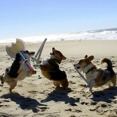 Corgis larping. Why? Why not?!