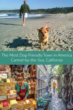 A travel guide for the dog crazy little town of Carmel-by-the-Sea, California. Dog-friendly things to do, places to eat, and hotels in Carmel, Monterey Bay. Travel Tips for Road Trip: A Guide to Dog-Friendly Vacations Carmel California, California Travel, Monterey California, Dog Travel, Travel Usa, Carmel Hotels, Dog Friendly Hotels, Carmel By The Sea, United States Travel