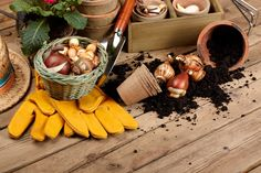 At Gardenesia, we have the complete solution for our customers who are seeking support regarding their plants and flowers.Here are some ways to plant flower seeds in pots in just 5 perfect steps. Online Plant Nursery, Bulb Flowers, Flower Seeds, Planting Flowers, Catering, Tips, Plants, India, Store