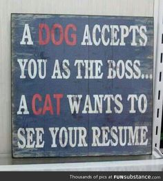 Funny pictures about What makes dogs and cats so different. Oh, and cool pics about What makes dogs and cats so different. Also, What makes dogs and cats so different. Crazy Cat Lady, Crazy Cats, Crazy Dog, Cat Vs Dog, Cat Quotes, Animal Quotes, Jokes Quotes, Humorous Quotes, Quirky Quotes
