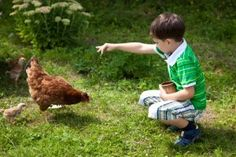 Raising Chickens | Stretcher.com - Even urban homesteaders are getting in on raising chickens