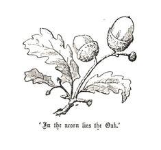 Acorn, oak leaves. 'In the acorn lies the Oak.' Handbook of Drawing, c. 1880