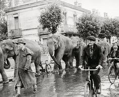 Robert Doisneau  //   Elephants on the road © Atelier Robert Doisneau                                                                                                                                                                                 More