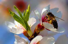 El veneno de las arañas puede salvar a las abejas de los pesticidas