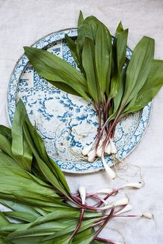 In season - May, wild garlic