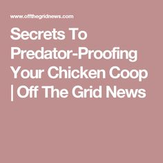 Secrets To Predator-Proofing Your Chicken Coop | Off The Grid News