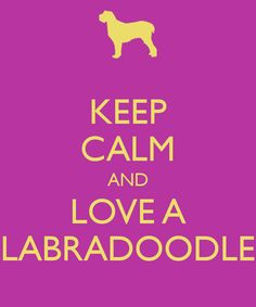 KEEP CALM AND LOVE A LABRADOODLE
