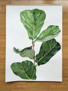 Fiddle leaf fig by BalsamAndHoney on Etsy