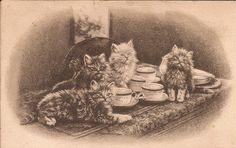 Tea Time Cats-Clarissa Collection