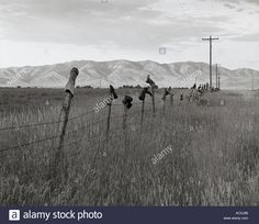 Old cowboy boots stuck on fence posts along a road in Malad, ID