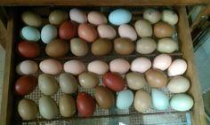 Natural chicken egg colors.    see - http://cdn.backyardchickens.com/5/53/900x900px-LL-53d0c481_IMAG0253.jpeg