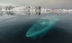 Sunken Yacht In Antarctica - 30 of the most beautiful abandoned places and modern ruins i've ever seen Abandoned Ships, Abandoned Houses, Abandoned Places, Abandoned Train, World's Most Beautiful, Beautiful Places, Amazing Places, Amazing Things, Beautiful Life