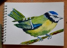 Introduction to watercolours. How to paint garden birds, including this blue tit. The watercolour tutorial is ideal for beginners and uses basic supplies and a limited palette.  To see more visit me at  https://www.facebook.com/JenBearDesigns #watercolourforbeginners #howtopaint #bluetits