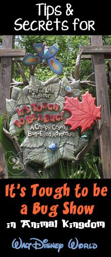 Tips and secrets for It's Tough to Be a Bug Show in Animal Kingdom. Pin now if you are planning a trip to Walt Disney World.