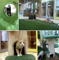 Calico Cattery Boarding Facility in Meridian, Idaho | moderncat :: cat products, cat toys, cat furniture, and more…all with modern style