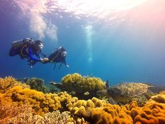 Scuba diving in Chapel, Apo Island: Finding love and beauty under the waves Beach Holiday, Holiday Fun, Coron Island, Visit Philippines, Puerto Princesa, Best Resorts, Tourist Spots, Palawan, Finding Love