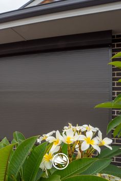 Roller Shutters, Window Shutters, Security Shutters, Motorcycle Dirt Bike, Outdoor Living, Windows, Plants, Blinds, Blinds