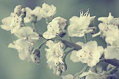 Blossom on Flickr.
