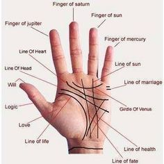 How to Read Palm Lines. Palm reading, also known as palmistry, involves looking at the shapes of your hands and the lines on them to possibly tell you about your life and personality. While there is no clear evidence that your palm lines. Palm Reading Charts, Tarot, Foot Chart, Palm Lines, Foot Reflexology, Spiritus, Vedic Astrology, Learn Astrology, Nutrition Education