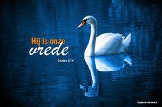 Want hij is onze vrede, hij die met zijn dood de twee werelden één heeft gemaakt, de muur van vijandschap ertussen heeft afgebroken en de wet met zijn geboden en voorschriften buiten werking heeft gesteld, om uit die twee in zichzelf één nieuw mens te scheppen. Efeziërs 2:14-15  #Jezus, #Vrede  https://www.dagelijksebroodkruimels.nl/efeziers-2-14/
